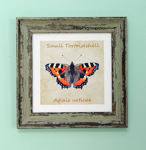 "Irish Garden Butterflies Small Tortoiseshell Art Frame 9""x 9"""