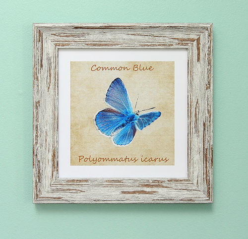 "Irish Garden Butterflies Common Blue Art Frame 9""x 9"""