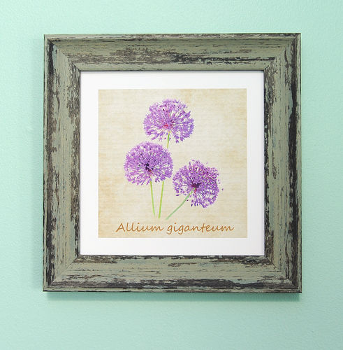 "Irish Garden Flowers Allium Art Frame 9""x 9"""