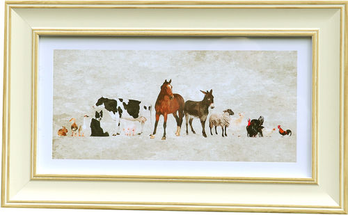 Farm animal panorama White Oak, available in 3 other frame colours.