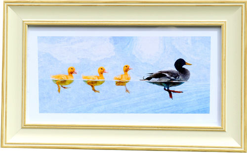 Duck Panorama White Oak, available in 3 other frame colours.