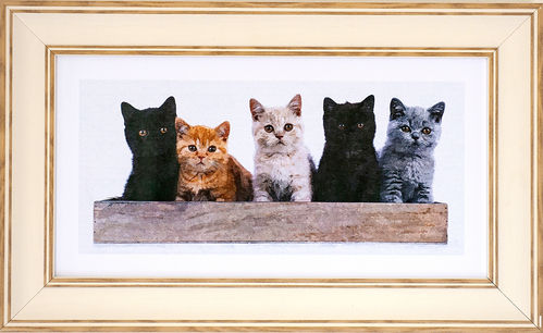 Kittens panorama, White Oak, available in 3 other frame colours.