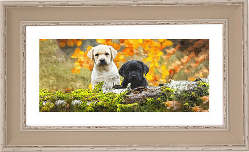 Pups panorama Dove, available in 3 other frame colours